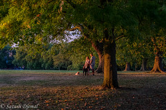DSCF6272.jpg (Sav's Photo Gallery) Tags: hillyfields dogs trees sunset goldenhour couple savash
