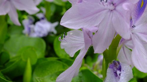 Flower in Zen Garden