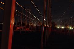 Ladies Night in Buffalo (Paul B0udreau) Tags: canada ontario paulboudreauphotography niagara d5100 nikon nikond5100 layer nikkor1855mm nighttime longexposure greenhouse girders redlight tripod structure lights