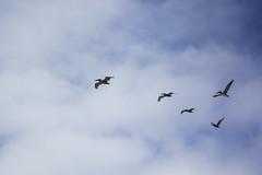 IMG_8482 (elenafrancesz) Tags: lands end sf san francisco sutro baths wordless birds