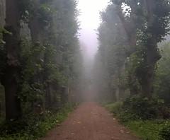 Gloomy path (Ingrid0804) Tags: path gloomypath trees alley fog mist