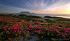 Table Mountain Pink Flower Sunset (Panorama Paul) Tags: paulbruinsphotography wwwpaulbruinscoza southafrica westerncape capetown tablemountain blaauwbergbeach sunset sourfig carpobrotusdeliciosus nikond800 nikkorlenses nikfilters