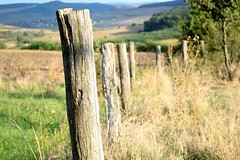 """Guarding """"Soldiers"""" (vladvizante) Tags: old fence logs abandoned rotten wood outside outdoor romania scenic serene nikon d3300 landscape"""