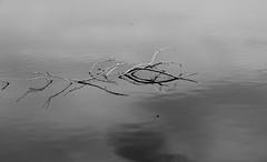Submergent (.Matteo D.) Tags: blackandwhite bw lake sticks pond pastel submerged submergent