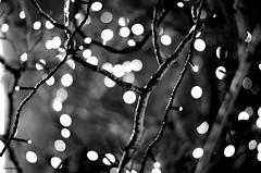 Santa's Grotto - EXPLORE (BGDL) Tags: blackandwhite lights bokeh explore santasgrotto nikond7000 bgdl nikkor50mm118g elementsorganizer11
