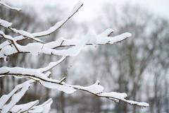 Weightlifting (dvanzuijlekom) Tags: winter snow tree sneeuw arnhem thenetherlands wonderland veluwe 2012 gelderland canonef50mmf18mkii canoneos7d buitenplaatskoningsweg kampkoningswegnoord