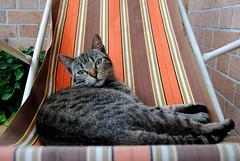 Mum (cinzia bertodatto) Tags: gatto gatti