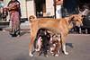 Breakfast - Kolkata, India (Maciej Dakowicz) Tags: dog india animal puppy puppies asia feeding kolkata calcutta westbengal