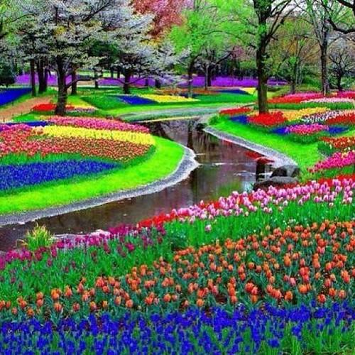 صورة رائعة من حديقة كيوكينوف في هولندا..