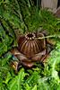 CU898 Fern Fountain (listentoreason) Tags: usa plant fern nature water fountain america canon geotagged unitedstates pennsylvania geocoded scenic favorites places longwoodgardens pteridophyta ef28135mmf3556isusm score25