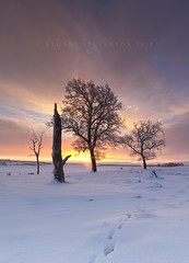 T'is the season... (Stuart Stevenson) Tags: uk longexposure trees light rural photography scotland countryside intense branches wideangle calm colourful snowfall wintersunrise lonetree surise lanark afterthesnowstorm clydevalley canon1740 southlanarkshire thanksforviewing transientlight canon5dmkii stuartstevenson ©stuartstevenson
