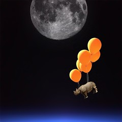 fly me to the moon (Janine Graf) Tags: cameraphone travel orange moon silly 6x6 balloons space surreal rhino exploration artrage orbit whimsical whiterhinoceros mobilephotography earthglow aliensky lenslight psexpress juxtaposer janine1968 iphone4s janinegraf squaready