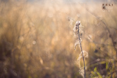 Winter light (Felix Schmidt Photography) Tags: lighting flowers light shadow orange sun plant blur flower color detail nature colors beauty grass yellow composition canon germany outdoors photography eos 50mm blurry focus mood photographer shadows dof angle bokeh outdoor pov background details atmosphere sunny 18 tones tone halle saxonyanhalt 60d