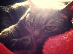 Cat Test (bobleepulte) Tags: cat mammothfilter