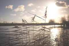 001:365 Happy New Year (Eliza Claire) Tags: lake grass reeds january newyearsday 1365 hpad vsco hpad2013 1stjanuary2013