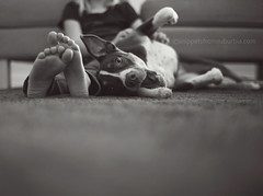 Relishing the down time... 1/52 (snippets_from_suburbia) Tags: blackandwhite dog girl chewtoy