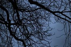 Baumdach (ueruesh) Tags: autumn winter tree contrast dark herbst kontrast baum dunkel