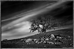 "Old Creek Road Oak (James A. Crawford - ""Crawf"") Tags: california trees wallpaper sky blackandwhite bw usa white black art texture nature leaves clouds photoshop canon landscape eos blackwhite leaf oak flora rocks country ngc creative calif textures cal pro oaks cayucos canoneos cambria unforgettable oaktrees blackdiamond digitalphotography edges obispo sanluisobispocounty blueribbonwinner finegold vividimagination creativephotography justimagine rockpaper cs5 efex niksoftware creativedigitalphotography flickraward theunforgettablepictures creativepostprocessing gnneniyisithebestofday blackdiamondpremier silverefexpro flickraward5 flickrawardgallery lostcontperdidos extraordinarilyimpressive fineplatinum finediamond imageborders magicmomentsinyourlifelevel1"
