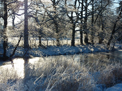 Winter solitude (Lancashire Lass Photo's) Tags: trees winter snow ice grass fence river frost december lancashire explore slaidburn ribblevalley forestofbowland riverhodder lancashirelassphotos suebristo
