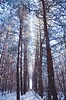 High (Adam Regecz) Tags: park travel blue trees winter white snow art ice nature beautiful pine forest landscape nikon scenery europe flickr colours seasons view angle crystal earth wildlife shapes best imagination colourful attractions pineforest magyarország tájkép d5100 boldva