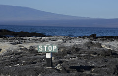 Galapagos - Fernandina Island - Stop Sign (sweetpeapolly2012) Tags: