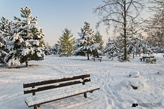 Laxou (Alexandre Prvot) Tags: schnee winter snow cold hiver nieve nevada jahreszeit neve invierno neige snowfall blizzard inverno froid nevado nevicata schneesturm nevasca schneefall ventisquero schneegestber ventisca tormentadenieve