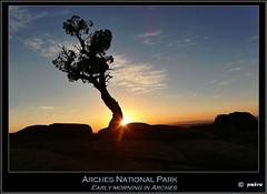 Arches National Park (pharoahsax) Tags: world park morning usa get tree colors rock sunrise utah arches national np sonnenaufgang baum felsen pmbvw worldgetcolors