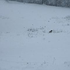 la neige (genievre) Tags: laneige