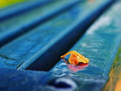 Empty park bench (Fear_Through_The_Eyes) Tags: