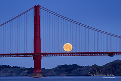 Full Moonset with Golden Gate Bridge (davidyuweb) Tags: sanfrancisco california bridge usa moon bus bird golden early gate with full fullmoon moonset sfist