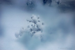 winter-storm-january 30 2013 (vanessadjones) Tags: snow garden wisconsinwinter
