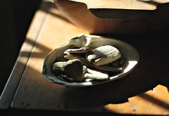 32::365 (lolaperl::maria) Tags: sunshine driftwood giftfromthesea