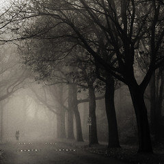 Biker (opdrie) Tags: road trees blackandwhite bw holland tree netherlands fog forest square interestingness foggy nederland explore squareformat squaredcircle shadesofgrey niederlande 500x500 interestingness28