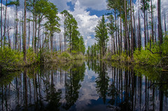 Okefenokee Swamp (Jon Ariel) Tags: okefenokee swamp park georgia usa water trees