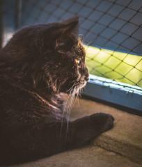Beer/ bear (WillemijnB) Tags: cat chat kat balcon balkon balcony fence net balk poutre filet