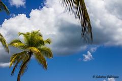 Punta Cana, Saona island, 2k16 (Salvatore Palmisano) Tags: beach 2k16 vacance palmier nuage chill repos dtente dream punta cana sky outdoor saona island