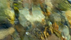 (Edinburgh Nette) Tags: rockpools abstracts beach water