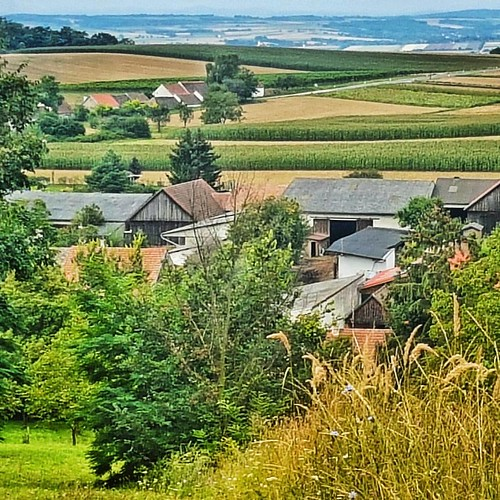 Beautiful hiking through the fields and vineyards of Austria's largest wine region. Interestingly farms are quite small here with acerages of about 150 acres as compared to neighboring Czech Republic with farms averaging more than 3,000 acres #austria #hi