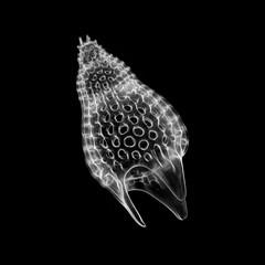 Radiolarian - Podocyrtis (Lampterium) mitra Ehrenberg - 160x (Picturepest) Tags: radiolarie radiolaria radiolarian polycystinea strahlentierchen fossil fossile skeleton skelett protist protists protisten einzeller unicellular protozoa protozoen protozoe plankton marine saltwater meer mikroskop mikrofotografie mikrofoto microscop microphotography micro mikro dark photomicrography minimalismus minimalism einfarbig schwarzerhintergrund