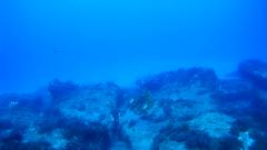Paz y buen rollito en los Burros (AAcero) Tags: almeria cabodegata buceo burros sj5000 diving almera isub