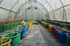 Ghanaian Greenhouse Agriculture (alexlebienheureux) Tags: agriculture bucket colorful development ghana green color greenhouse plants growing row multi colored plant volta business