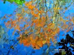 DAO-87142 (Chen Liang Dao  hyperphoto) Tags:   taiwan