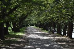 I went Hirosaki-Castle(Hirosaki Park) in Aomori, the northest prefecture in japanese main island ! (junjunohaoha) Tags: aomori hirosaki japan nikon d5300 hirosakicastle castle