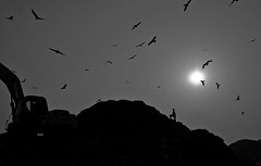 Life near a dump yard (Murad Fotografia) Tags: sky sun dumpyard light dailylife reportage street survival survivor boy birds documentary photojournalism bangladesh blackandwhite monochrome hasanmurad