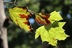 Cooper Union and Neighborhood (ShellyS) Tags: nyc newyorkcity manhattan eastvillage streets leaves trees