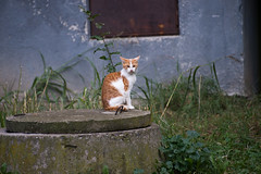 1 (akk_rus) Tags: 70300mmf4556gvr nikkor70300mmf4556gifedafsvr nikkor 70300mm nikon d800 nikond800 bulgaria   europe  burgas  cat cats pet pets chat chats animal animals nature feline gato    streetcats straycats