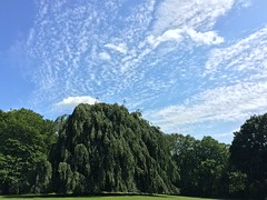 Blohms Park in Hamburg-Horn with a beautiful weeping willow. (arwed.kubisch1) Tags: hamburg blohms park urban clouds cloudy wolken wolkig sunny sonnig tree baum weeping willow trauerweide grass rasen