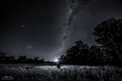 The Clearing. Black and White edit. (Bill Thoo) Tags: theclearing milkyway blackandwhite parkes nsw australia astrophotography stars night longexposure field travel landscape sony a7rii samyang 14mm ngc