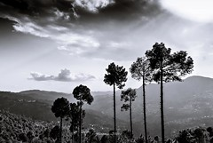 Fear, what if the best is past (Fortunes2011. Closure of 6 years) Tags: fortunes2011nikon landscape trees pines mountains hills mountain range murree azad kashmir clouds sky outdoor bw blackwhite