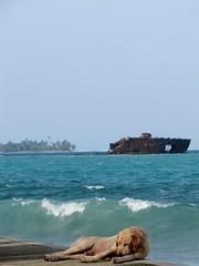 Cotidiano (jakza - Jaque Zattera) Tags: isla de san andres cachorro mar navio encalhado frenteafrente